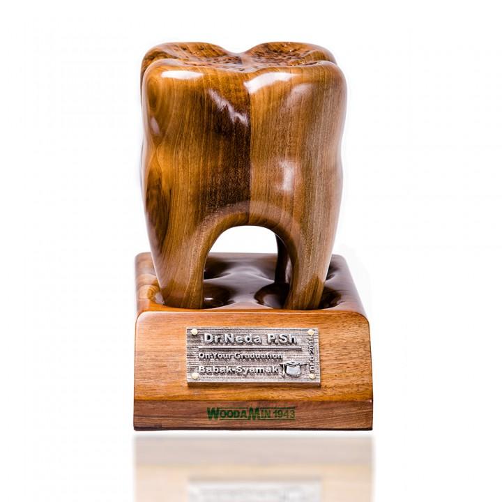 مدل چوبی دندان